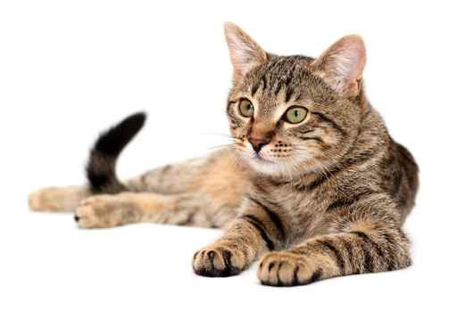 home-cat