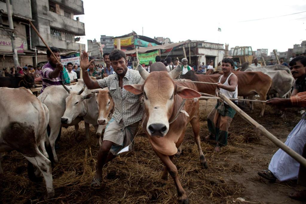 eid-al-adha-preparations-bangladesh