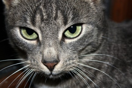 My grandma's cat, Susi