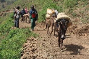 Working donkeys