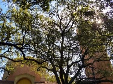 Rice University in Houston, Texas