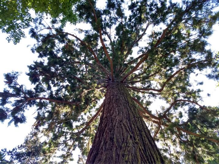 Tree on Mainau Island, Germany