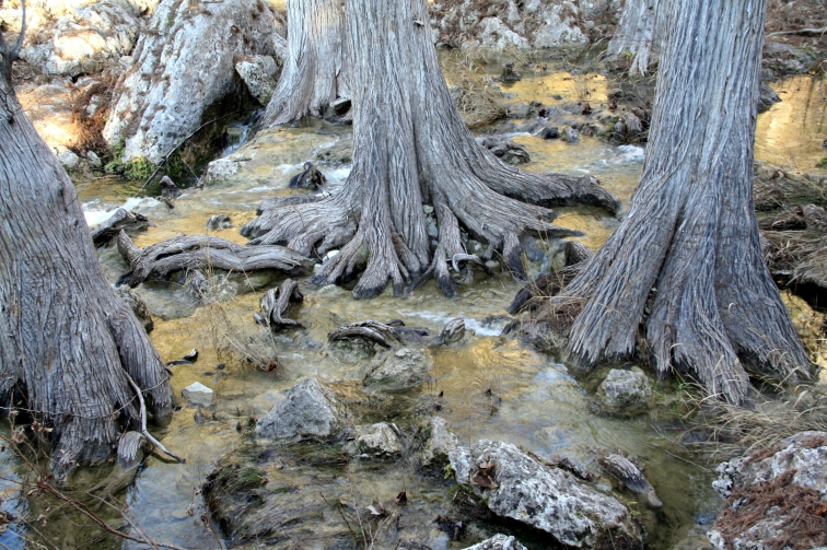Trees at Hamilton Pool Preserve in Texas