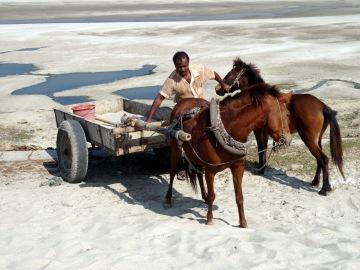 Working horses in Kushtia, Bangladesh
